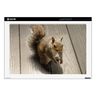 Brown Squirrel Decals For Laptops
