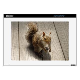 Brown Squirrel Laptop Decals
