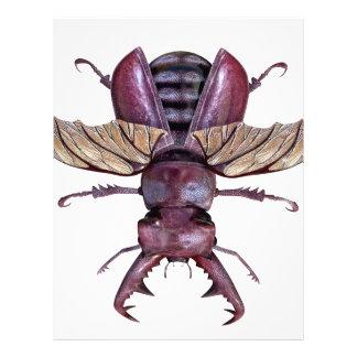 Brown Stag Beetle Letterhead