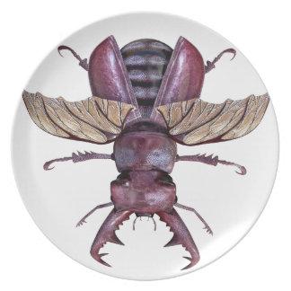 Brown Stag Beetle Plate