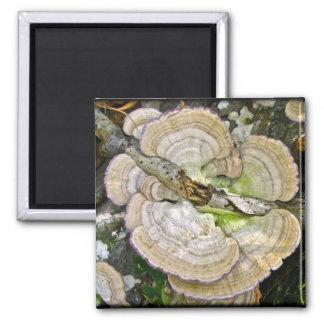 Brown Striped Shelf Fungi Items 2 Inch Square Magnet