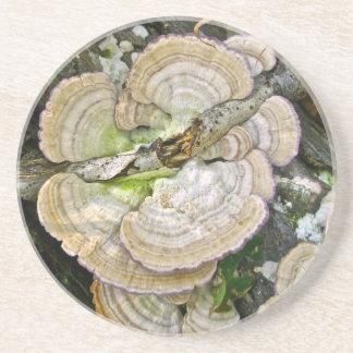 Brown Striped Shelf Fungi Items Coaster