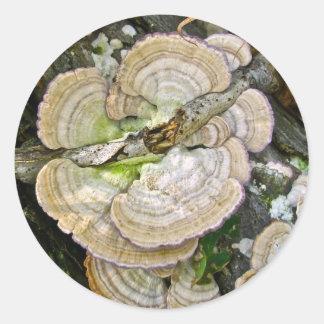 Brown Striped Shelf Fungi Items Round Stickers