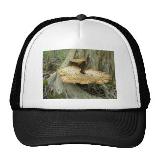 Brown Striped Shelf Fungus Coordinating Items Trucker Hat