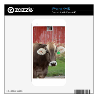 Brown Swiss Cow iPhone 4 Skins