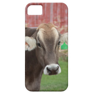 Brown Swiss Cow IPhone Case