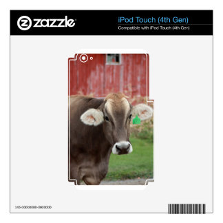 Brown Swiss Cow iPod Touch 4G Skin