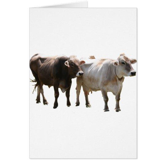 Brown Swiss Cows Card