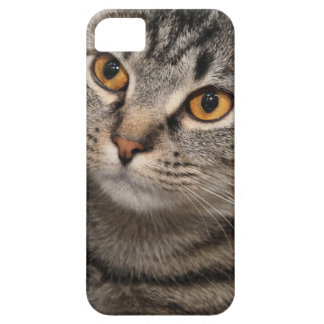 BROWN TABBY CAT CELL PHONE CASE