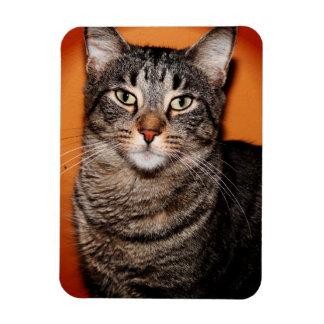 BROWN TABBY CAT MAGNET
