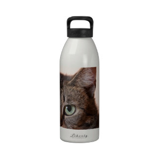 Brown tabby cat with amazing green eyes water bottles