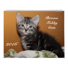 Brown Tabby Cats 2016 Calendar at Zazzle