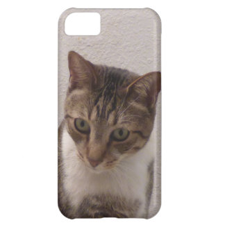 Brown Tabby iPhone Case