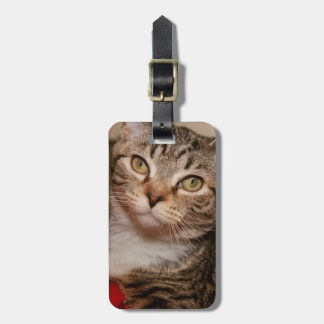 BROWN TABBY LUGGAGE TAG