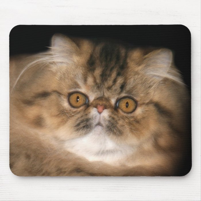 Brown tabby persian mouse pad