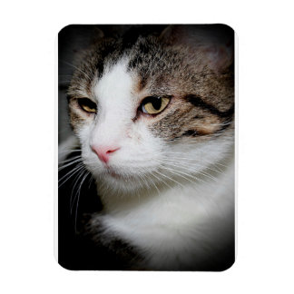 BROWN TABBY WITH WHITE MAGNET