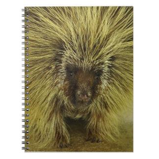 Brown Texas Porcupine Photograph notebook