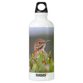 Brown Thrasher Aluminum Water Bottle