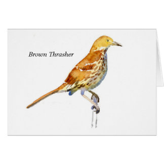 Brown Thrasher Cards