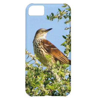 Brown Thrasher iPhone 5C Cases