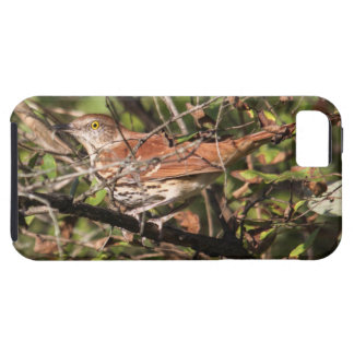 Brown Thrasher iPhone 5 Covers