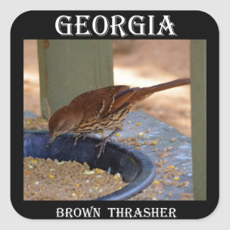 Brown Thrasher (Georgia) Pegatina Cuadrada