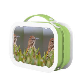 Brown Thrasher Lunch Box