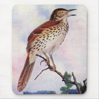Brown Thrasher Mouse Pad