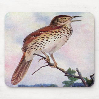 Brown Thrasher Mouse Pads