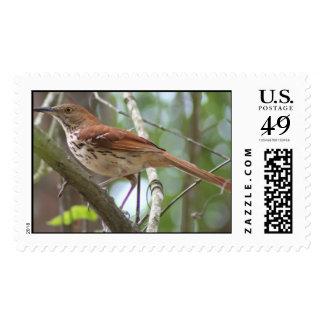Brown thrasher postage