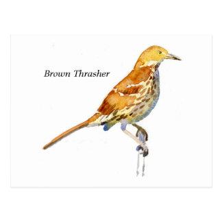 Brown Thrasher Postcard