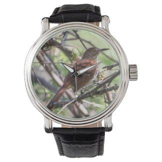 Brown Thrasher Reloj