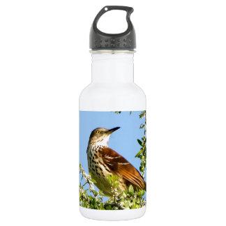 Brown Thrasher Stainless Steel Water Bottle