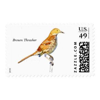 Brown Thrasher stamp