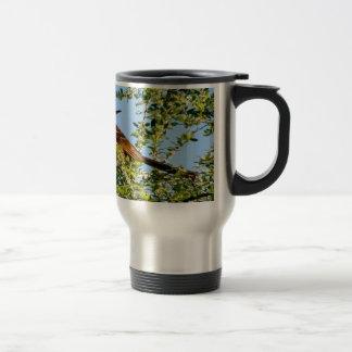 Brown Thrasher Travel Mug