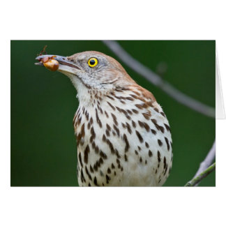 Brown Thrasher w/ Catch Of the Day Gifts Apparel Card