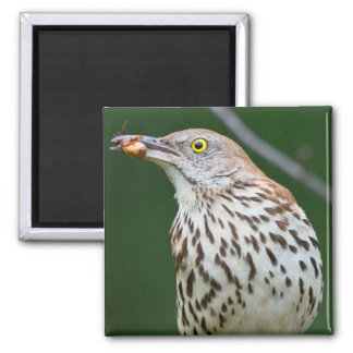 Brown Thrasher w/ Catch Of the Day Gifts Apparel Magnet
