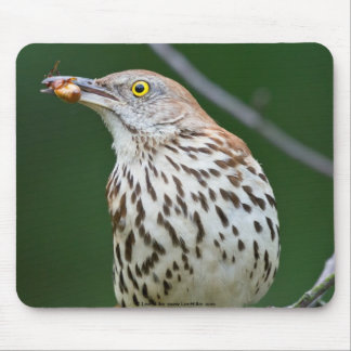 Brown Thrasher w/ Catch Of the Day Gifts Apparel Mousepad