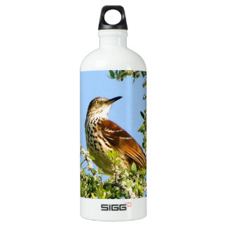 Brown Thrasher Water Bottle