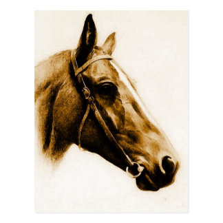 Brown Tones Horse Portrait Postcard
