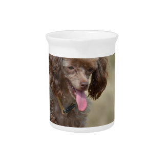 Brown Toy Poodle Drink Pitcher