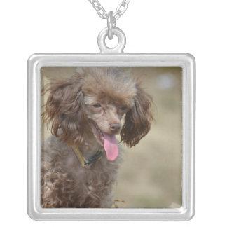 Brown Toy Poodle Square Pendant Necklace
