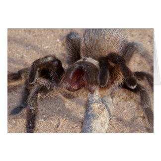 brown-trantula stationery note card