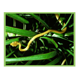 Brown tree snake postcard