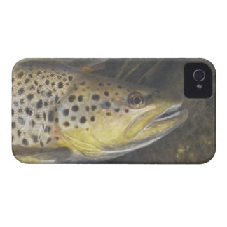 Brown Trout iPhone 4 Case