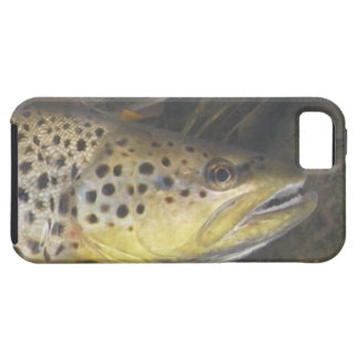 Brown Trout iPhone 5 Case