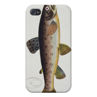 Brown Trout (Salmo Iasustris) plate XXIII from 'Ic iPhone 4/4S Covers
