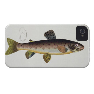 Brown Trout (Salmo Iasustris) plate XXIII from 'Ic iPhone 4 Case-Mate Case