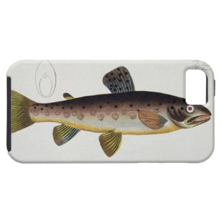 Brown Trout (Salmo Iasustris) plate XXIII from 'Ic iPhone SE/5/5s Case