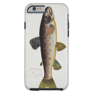 Brown Trout (Salmo Iasustris) plate XXIII from 'Ic Tough iPhone 6 Case